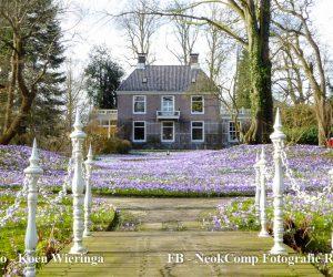 Landgoed Overcingel (Assen) laat publiek genieten van krokustuin.