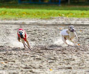 Internationale CACIL Herfstcoursing 2017 op Ronostrand weer succesvol evenement.