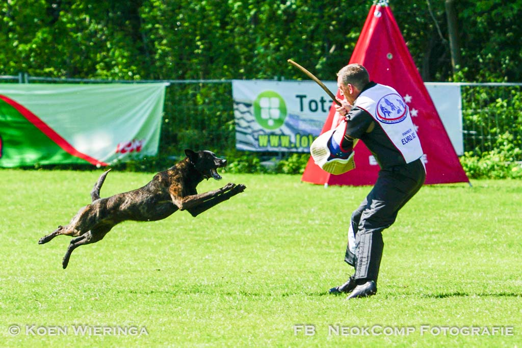 WK IPO van World Dutch Shepherd Federation in Roden groot succes!!