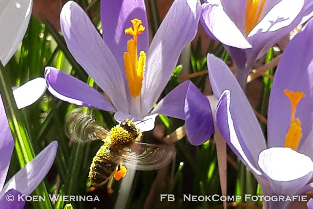 Bloeiende beelden in het (te) vroege voorjaar (macro)