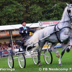 2019-07-29 Norg, Nationaal Tuigpaarden Concours weer een schitterend topevenement.