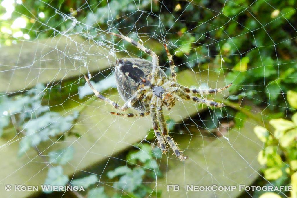 Spinnentijd – De herfst is begonnen. Alleen fotoserie.
