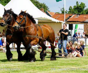 Prachtige demo's bij Paardenshow in Peize.