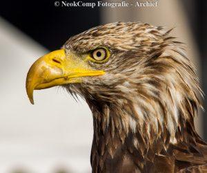 Roofvogels (archiefbeelden van demonstraties door De Valk Roofvogels)